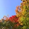 今年の紅葉は鮮やかです 十勝ヒルズ~10月13日の巻