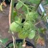 森バナ農園2021㉛ 『農園の様子&収穫(8/9~11)』