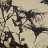 古典菊の影絵遊び