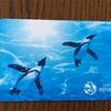 サンシャイン水族館の年間パスポートを手に入れた