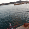 淡路島のサビキ釣り2020年10月下旬
