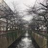 旅run@目黒川〜代々木公園〜『中国茶房8新宿店』