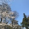 秋田駅周辺の歩いて周れる観光スポット