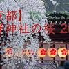 【京都の動画】YouTubeへ初めて動画を貼りました。初回は2011年、平野神社の桜。以後御贔屓にお願いします。