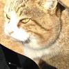 また来たよネコの日 で、旅ネコ