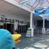 ジュゴン!ウミガメ!鳥羽水族館は想像以上の楽しさだ(志摩リゾート旅その9)(177)