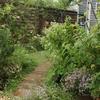 7月初旬の雨の庭