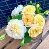 留守の間のバラたち