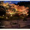 行ってみよう、松島紅葉ライトアップ!
