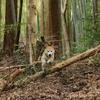 EOS R5 森で走るわんこの瞳AFテスト-その3-
