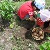貸し畑を借りて自家製の野菜を育てよう