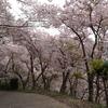 桜づくし・嵐の翌朝篇