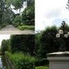 写真保存を兼ねたブログ 5月徒然 風薫る 都立小金井公園 江戸東京たてもの園(2)