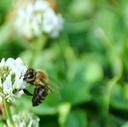 ミツバチの休憩所