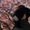 三浦の桜まつり