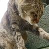 最終話 猫は飼い主と歩むもの