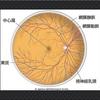 周辺視野強化!視覚情報の伝達スピードとコントラスト感度をUPするには⁉︎ US-VTビジョントレーニング