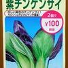 「紫チンゲンサイ」の水耕栽培に挑戦。本当に葉の表面だけ紫色になるのでしょうか?