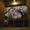 光徳寺さんの夜桜再び@2020