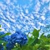 【埼玉・美の山公園】東京から気軽に行ける紫陽花の畑はココ!!