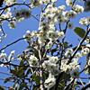 梅の花に癒される