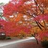 旧細川刑部邸庭園の紅葉ライトアップ
