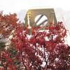 新梅田シティの紅葉②観光38R...過去20121221大阪