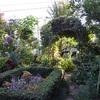 桂造園の庭木剪定