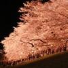 夜桜お花見ツー