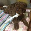 甘夏こぼれ話 〜犬は、寝床を汚さない⁉︎〜