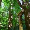 鳥海山 玉簾の滝・不動の滝