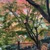 高尾山で紅葉狩り