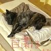 ジシュドコ〜恋どこハ観テタョ?(੭ु˙꒳˙)੭ु⁾⁾