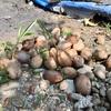 ココナッツの木はウザい部分もある