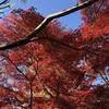 【鎌倉いいね】今年の鎌倉の紅葉はいつ頃が見頃か?気合を入れて予想する。