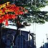 一人旅で行ってきた宮城の名湯 鳴子温泉