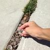 駐車場のコンクリートの継ぎ目にクルミの殻を
