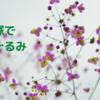 宝塚であみぐるみパート26📕