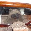 つばめの羽化とモリアオガエルの産卵