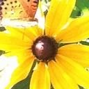 flower-diary-