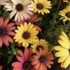 ガーデニングで心を癒やす、冬から春に咲く花たち。