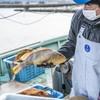 2020年4月7日 小浜漁港 お魚情報