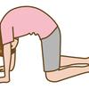 ヨガの猫のポーズは背骨の柔軟と腹筋を鍛えられる:効果とコツについて