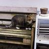 Cats ベルギーで出会った猫-3-