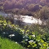 堰過ぎて陽畳み眩し冬の川