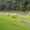 久慈川鮎釣り