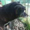 老犬介護のコツ「心・身体の休憩」