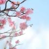 2019年(平成31年)、春財布で金運を高める方法