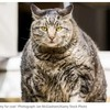 外出自粛中に猫にエサをあげすぎ? 猫の肥満について飼い主が気を付けたい4つのポイント