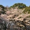 桜吹雪始まる